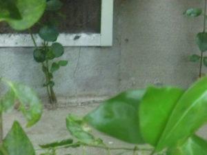 総合リフォームのハートホーム 日野市にて東日本大震災地震保険申請のご報告