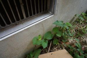 東京都小金井市で損保ジャパンの地震保険申請