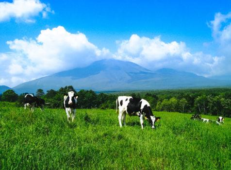 神奈川県大和市南林間で地震保険申請のご報告 東日本大震災のお見舞金について
