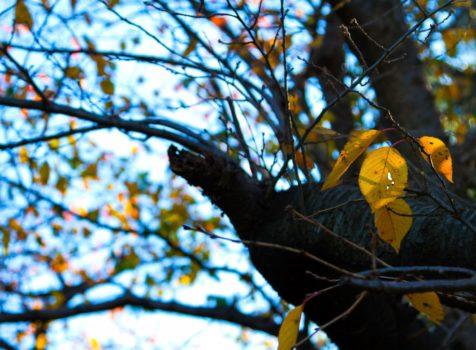 神奈川県逗子市枯れ葉による雨どいの詰まりを解消!