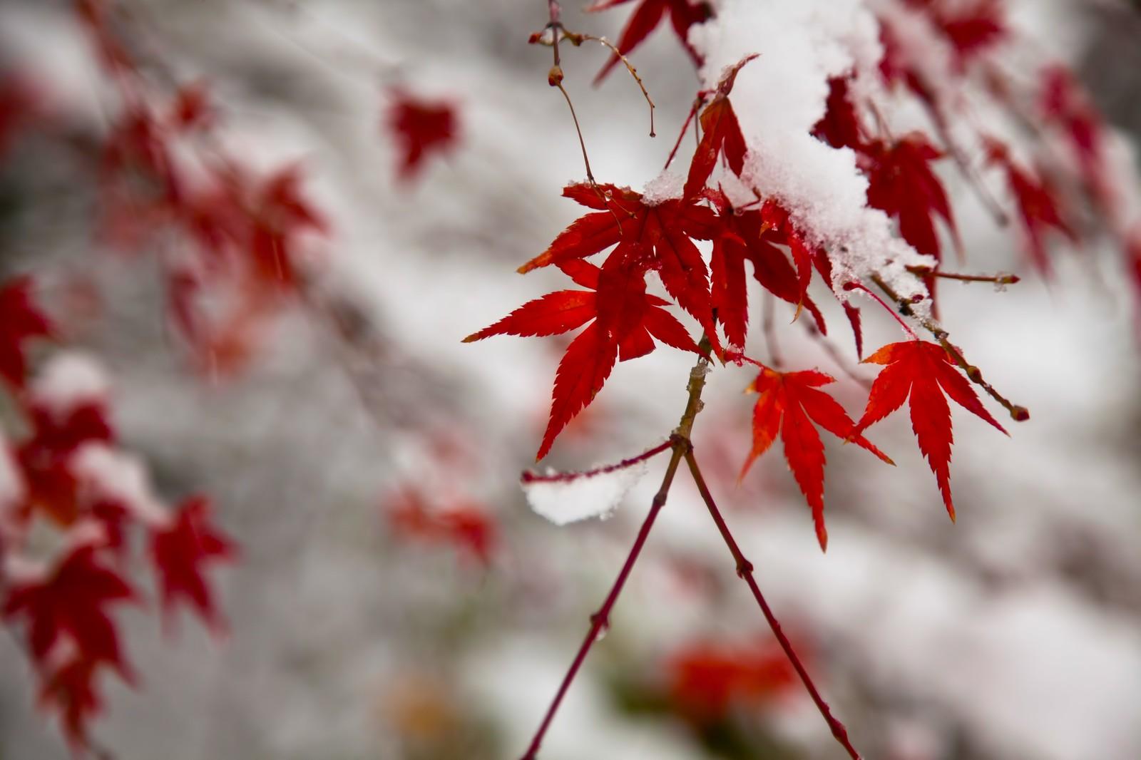 【施工完了報告!】神奈川県厚木市にて雨どい交換およびベランダ塗装を行いました!