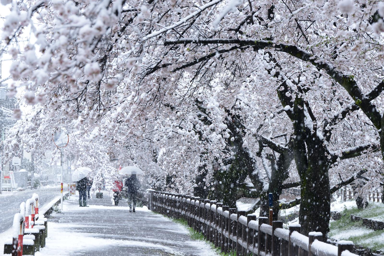 【施工完了報告!】どんな火災保険でも直せるの?東京都狛江市にて雨樋交換!